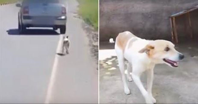 When This Dog's Owners Drove Off Without Him, One Man Came To The Rescue