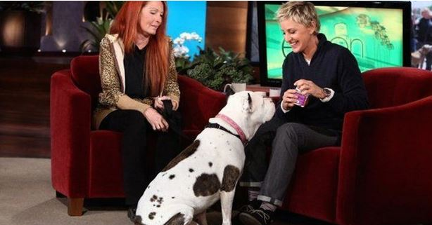 Ellen Invites A Pit Bull On TV And He Ends Up Stealing The Show And Winning Everyone Over