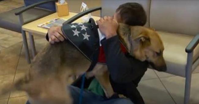 Touching Reunion: Marine Veteran Finds Missing Service Dog
