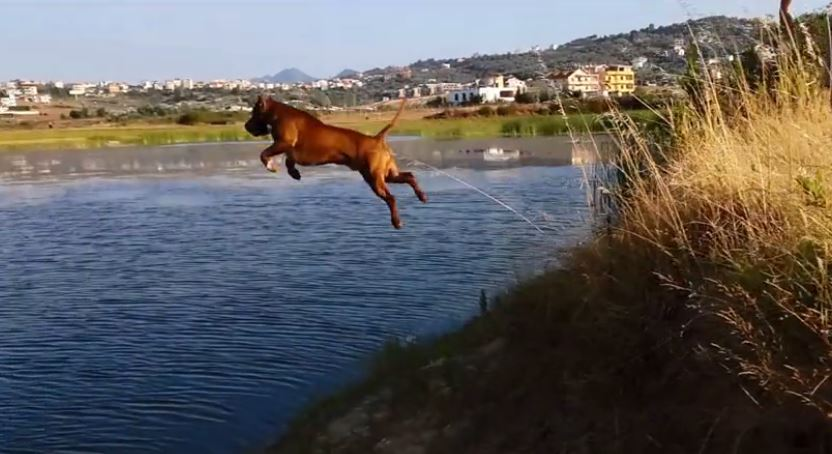 Pit Bull's fearless cliff dive captured in slow motion