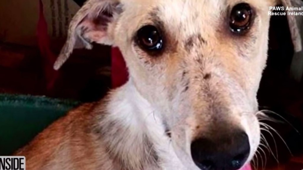 Abused Dog Stares at Wall for Days After Being Rescued