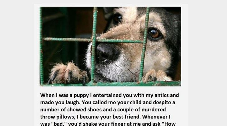 A Message From The Dog You Abandoned. This Is Heartbreaking. Wow, NO WORDS.