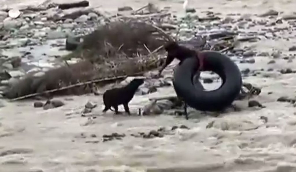 There Are Rescues And Then There's THIS!