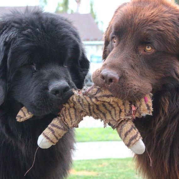 03-Big-Dog
