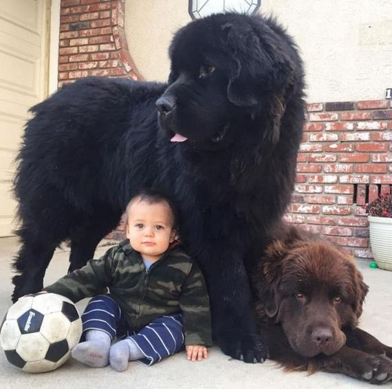 05-Big-Dog