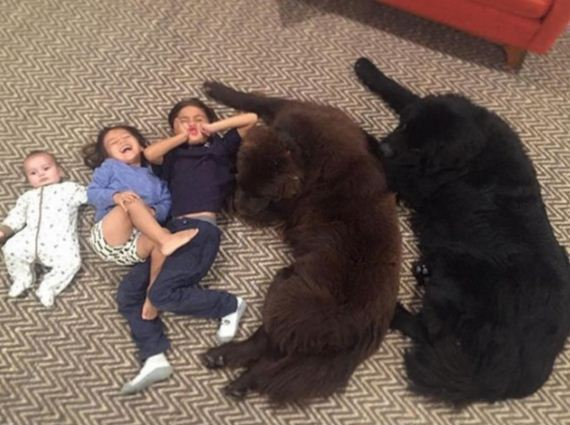 Two Enormous Dogs May Be The World's Biggest Babysitters