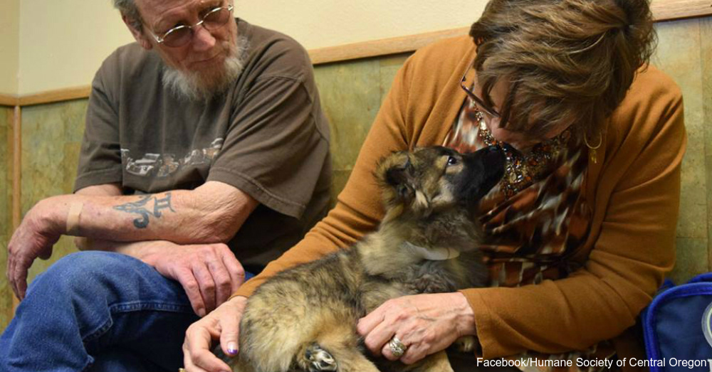 Second Chance: Dogs Rescued From South Korean Dog Meat Farm Find Hope in Oregon