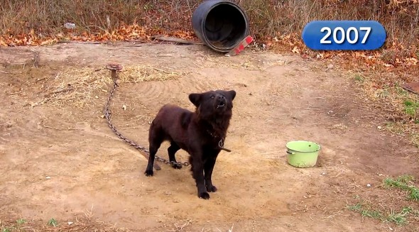 Dog Who Spent NINE YEARS on a Chain Is Finally FREE!