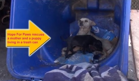 Local Kids Had Stolen All But 1 Of Her Pups. She Wasn't About To Lose This One…