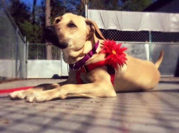 LWD Presents: Sandy, Our Adoptable Dog of the Day!