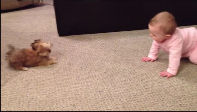 They Put Baby On The Floor, But When Puppy Does THIS, Dad Can't Stop Laughing!