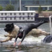 This Dog Jumps In The Water With His Human. What He Does Is INCREDIBLE.
