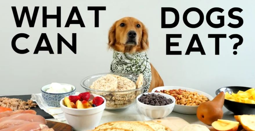Helpful Video Shows What Our Dogs Should And Shouldn't Eat