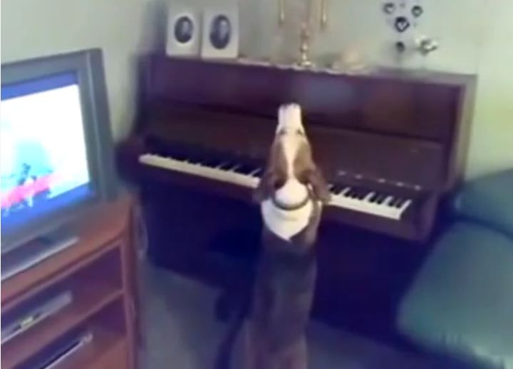 Dog Imagines Self as Next Beethoven