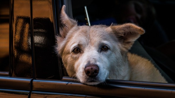 Michigan Pushing to Make Leaving Dogs in Hot Cars a Felony