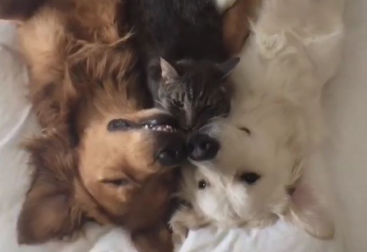 The Cutest Cuddle Buddies You'll Ever See
