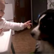 Babies Feeding Their Dogs
