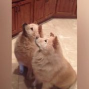 The Most Polite Dogs In The World Sweetly Raise Their Paws For A Treat