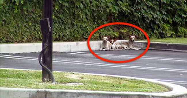These 3 Homeless Pups Were Huddled In Fear. But When They Realize They're Being Rescued… Wow.