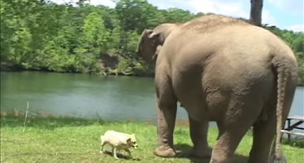 Stray Dog Shows Up At Elephant Sanctuary And Is Adopted…By An Elephant!