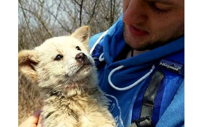 Hiker Saves Puppy Escaped from Meat Farm
