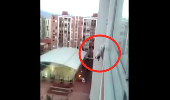 A Dog Is Seen Dangling From The 13th Floor. But Wait Till You See Directly Below Him… OMG