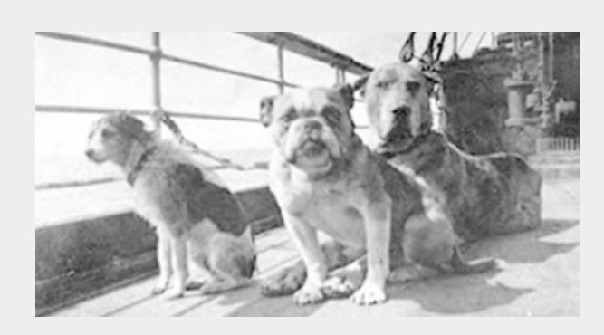 The story of how twelve dogs abroad the Titanic ship! Amazing