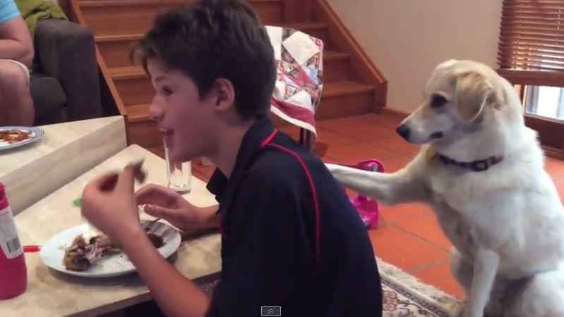 Military rescue dog hilariously demands scraps
