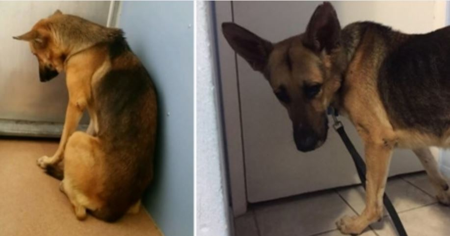 They were going to euthanize him but see how he got a miraculous second chance in life