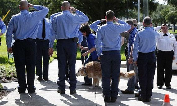The Last Surviving Search Dog From 9/11 Has Passed Away