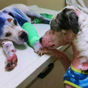 Abused dog comforts another pup who's been through Hell