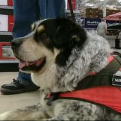Hardware store's got a furry new hire!