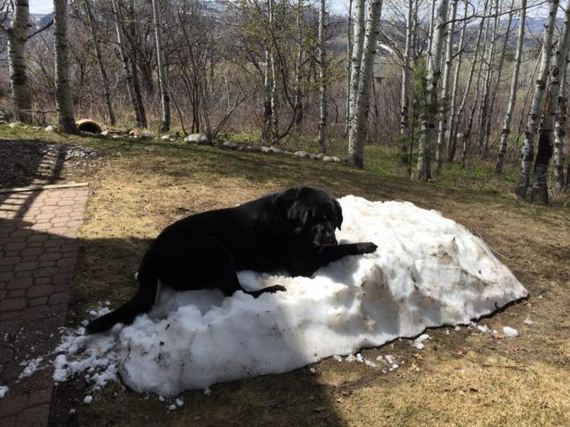 Most People Love When Summer Comes, But This Dog Just Can't Handle The Snow Melting