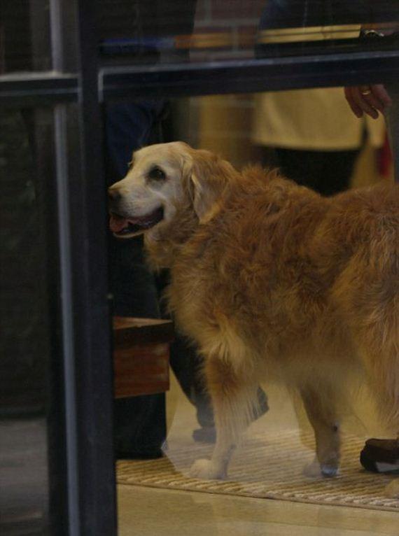 04-9_11_search_dog