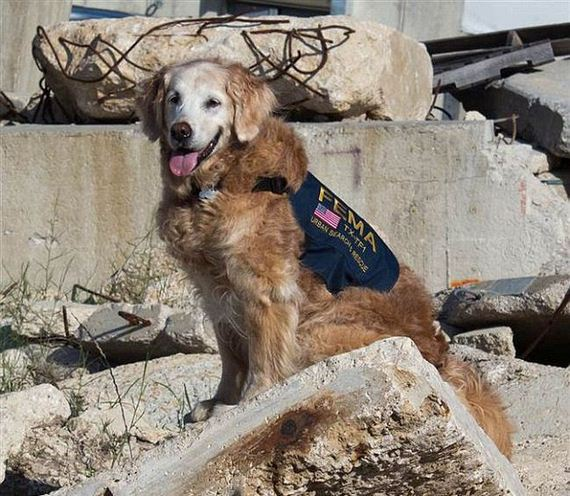 05-9_11_search_dog
