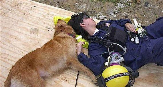 06-9_11_search_dog