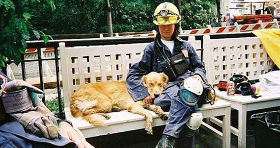 07-9_11_search_dog