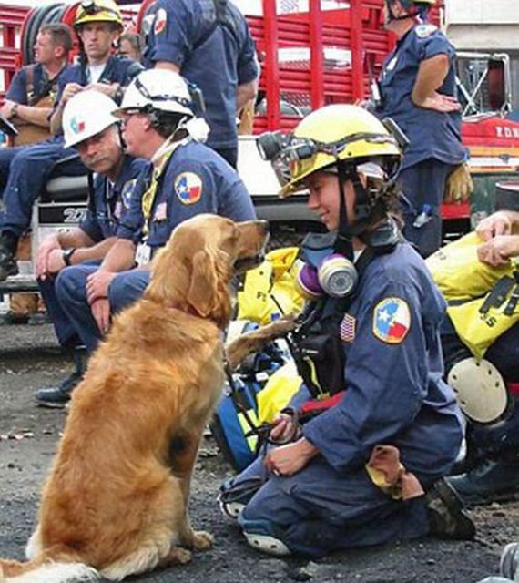 08-9_11_search_dog