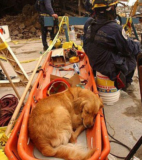 09-9_11_search_dog