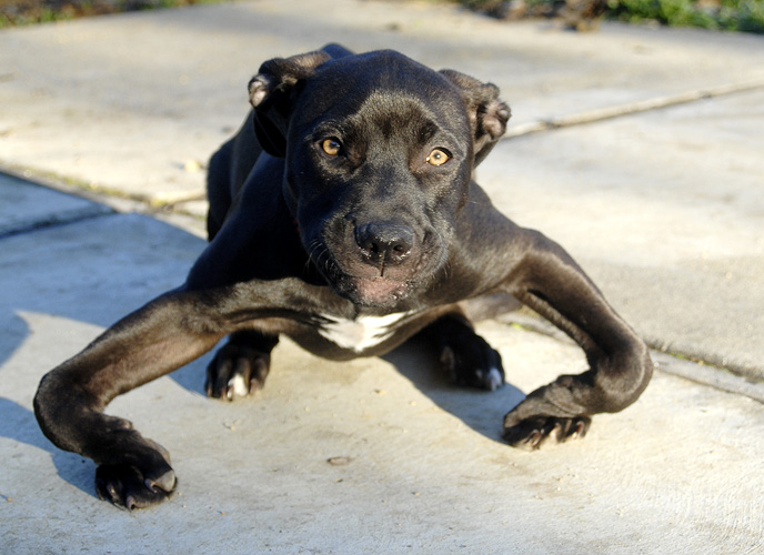 This Abandoned Puppy Had Severely Bowed Legs–But Look At Him Now!
