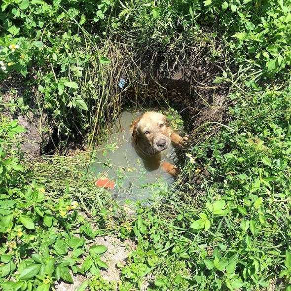 Police Officer Helps Save a Puppy from Drowning, then Decides to Become His Dad