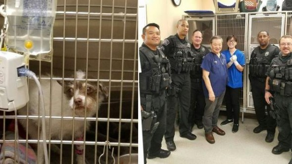 Airport Cops Save the Life of Little Dog Hit by a Car
