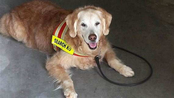 10-9_11_search_dog