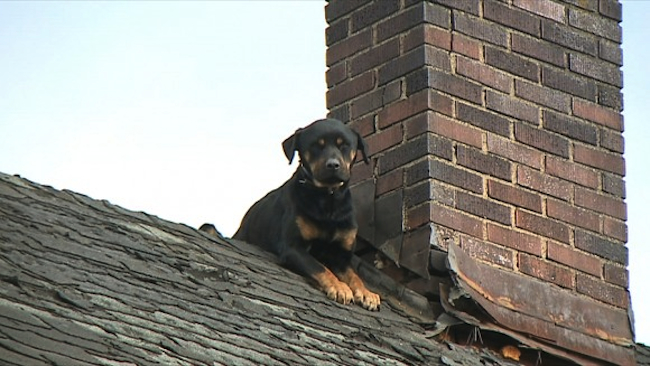This Poor Dog Was Left To Die On The Roof All Alone. Three Days Later? Unbelievable.