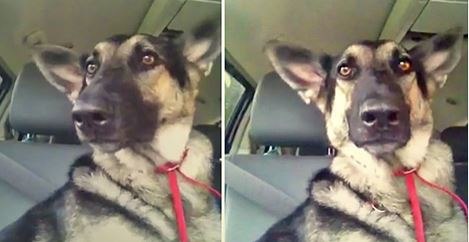 This Dog Heard Her FAVOURITE Song And Did Something Her Human Just Had To Catch On Video!