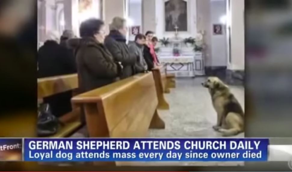 German shepherd dog 's Owner Passed Away, And What Happened Next Is Simply Unbelievable