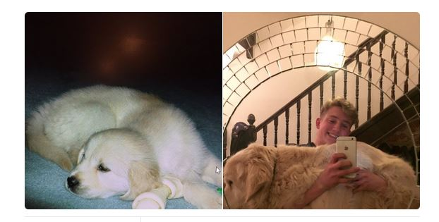 Puppy With Cancer Wasn't Supposed To Make It Past 1 Year. Now Look At Him 13 Years Later!