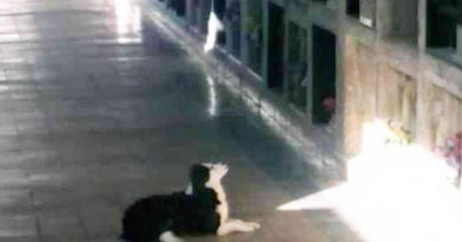 Female dog visits tomb every day to recall the memory of her deceased owner