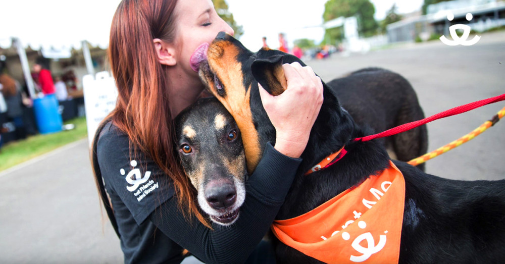 A Dog Named Goose And His Adoption Journey