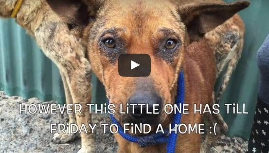 Abused, Homeless Dog Refuses to Leave Without Her Friend